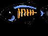 http://pelegri.files.wordpress.com/2011/05/glassfishlogo-98_74.png